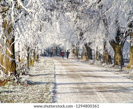 wintertime, joggers running along an alley flanked by trees with white branches glazed by ice #1294800361