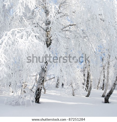 Wintry landscape with snowy trees.
