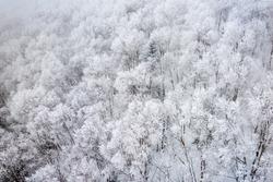 Wintry trees from above on  Mt. Kurodake  Hokkaido, Japan.