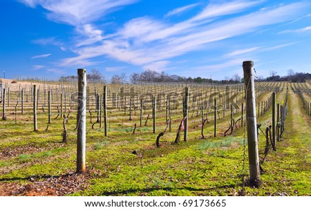 Wintry vineyard under a blue sky.