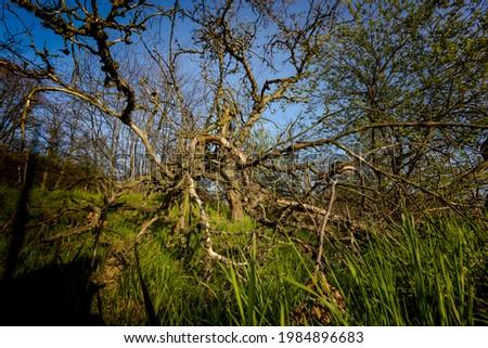 Wiosenne słońce nad polami. Zarośnięte tory kolejowe. Pokręcone drzewa. Droga polna Zdjęcia stock ©