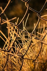 wired fence by a road in the countryside, frosty grass and frosty fence, soft golden light, taken whilst walking on a road to the meadow on an autumnal cold morning, perfect background