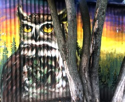 wise owl is painted on the corrugated street wall