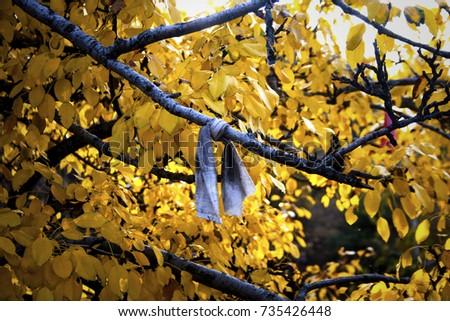 Wish tree #735426448