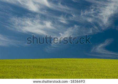Wispy clouds float by an open meadow of green grass