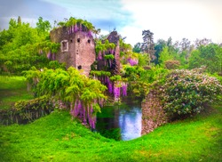 wisteria flowers landscape in fairy garden of ninfa in Italy - medieval tower ruin surrounded by river in real impressionist garden  .