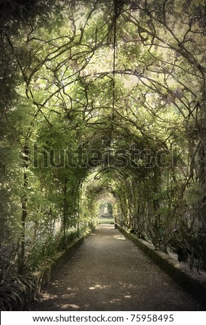 Wisteria tunnel in an ornamental garden