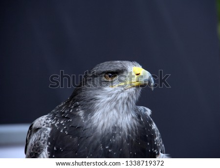 With sharp eyes and sharp beak its alert and ready to fly