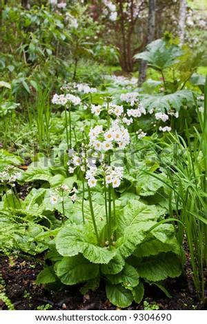 Withe flower in the garden