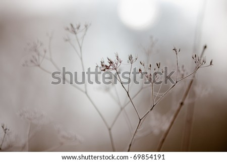 withered plants in wintry fog