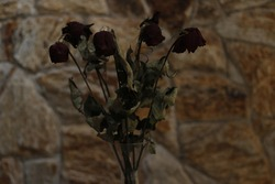 Withered red roses, flowers almost dead.