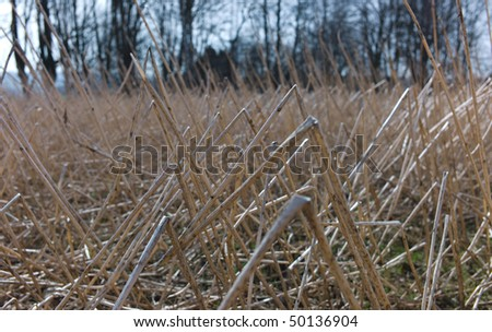 Withered stems in field
