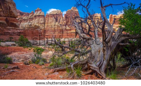 Withered tree in from of red rock canyonlands national park features monuments desktop background wallpaper landscape photography blue sky southwest desert Utah features geology sandstone