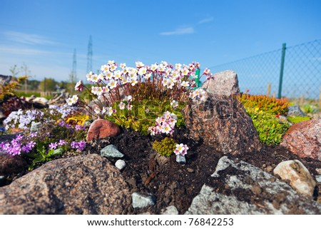 Withers garden with flowers growing on the rocks.