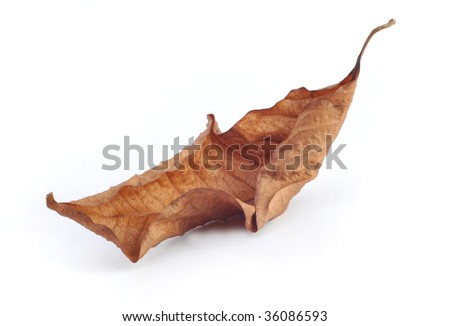 Withers leaf in white background
