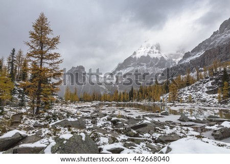 Wiwaxy Peaks as seen from Opabin Plateau on a snowy and cloudy day in Yoho National Park, British Columbia, Canada #442668040