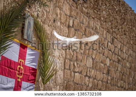 Wjite dove at Holy Lavra of Saint Sabbas, Mar Saba. Eastern Orthodox Christian monastery there letter containing Secret Gospel of Mark was found. Near Jerusalem and the Dead Sea. West Bank, Israel. #1385732108