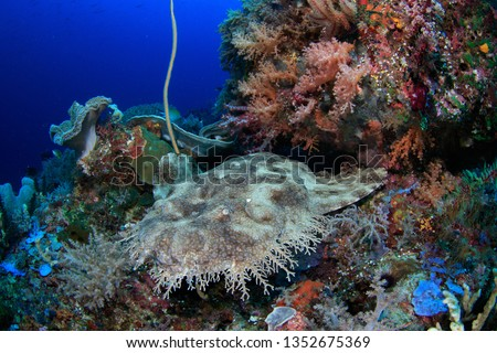 Wobbegong shark resting under a coral head, photographed while scuba diving in Raja Ampat, Indonesia #1352675369