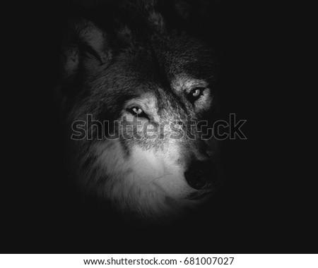 Wolf  #681007027