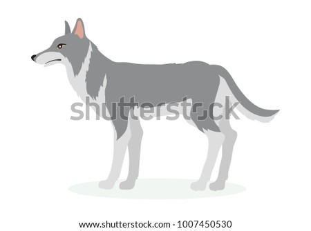 Wolf cartoon character. Wolf or dog flat  isolated on white background. North America and Eurasia fauna. Wolf icon. Animal illustration for zoo ad, nature concept, children book illustrating