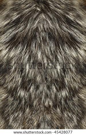 Wolf Fur up-close