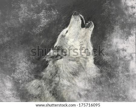 Wolf, handmade illustration on grey background