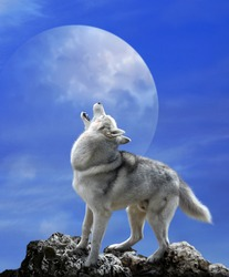 Wolf howls in the background of the moon