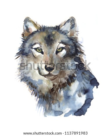 wolf illustration watercolor avatar #1137891983