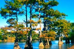 Wolf Lake, Cypress trees, Yazoo County, Mississippi, USA