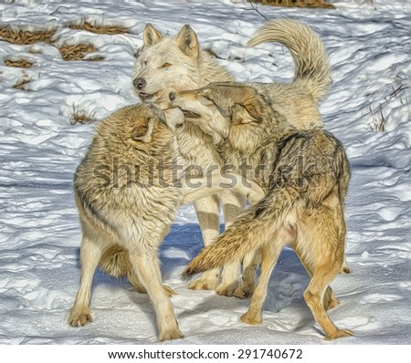 Wolf pack interaction. Winter in Northern Minnesota. Digital oil painting
