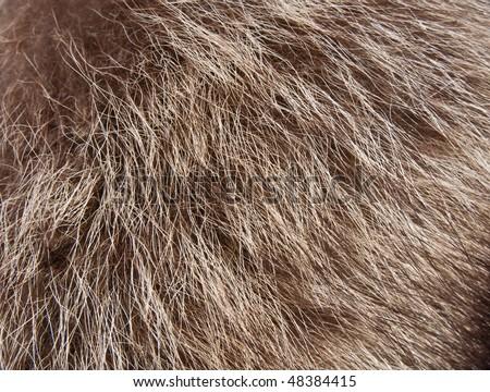 Wolf's fur texture - stock photo