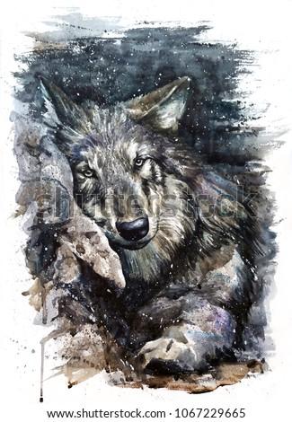 Wolf watercolor animals predator wildlife