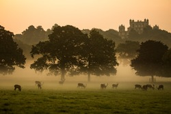 Wollaton Hall and Deer Park Nottingham dramatic misty morning with red deer sihouettes. Visit England tourism beautiful places to see and visit United Kingdom UK