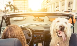 Woman and her dog driving on the car in Los angeles. dog watching behind and enjoying the wind in the fur. Animals and people concept