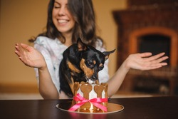 woman and toy terrier with dog cake infront on a birthday party