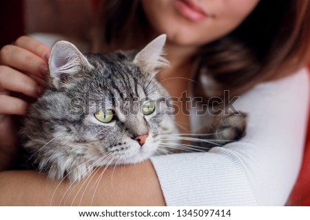 Woman at home holding and hug her lovely fluffy cat. Gray tabby cute kitten with green eyes. Pets, friendship, trust, love, and lifestyle concept. Friend of human. Animal lover. Close up.