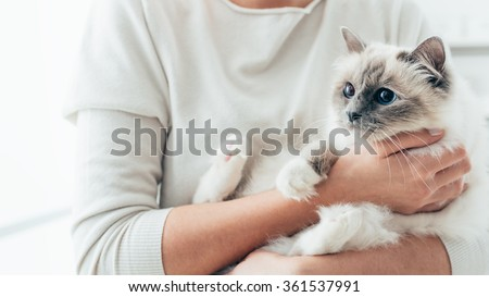 Woman at home holding her lovely birman cat, room interior on background, pets and lifestyle concept