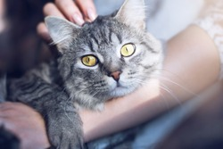 Woman at home holding her lovely fluffy cat. Gray tabby cute kitten with beautiful eyes. Pets, friendship, trust, love, and lifestyle concept. Friend of human. Animal lover.