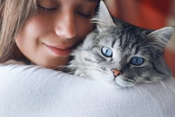 Woman at home in light room holding and hug her lovely fluffy cat. Gray tabby cute kitten with blue eyes. Pets, friendship, trust, love, and lifestyle concept. Friend of human. Animal lover. Close up.