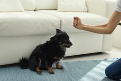 Woman beating dog at home, closeup. Domestic violence against pets