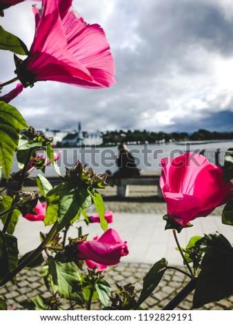 Woman behind flowers sitting on benach at lake in reykjavik