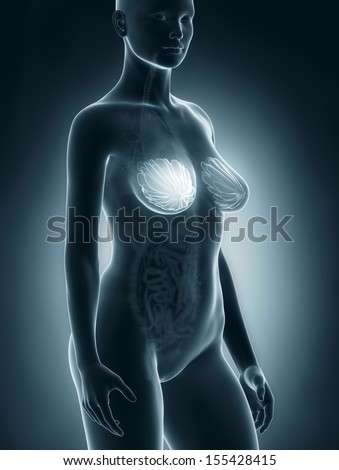 Woman breast anatomy | EZ Canvas