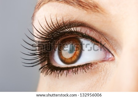 woman brown eye with false  extremely long lashes