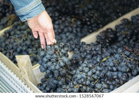 Woman buys fresh black grape at grocery store.