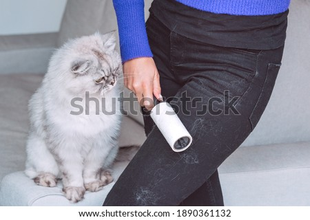 Woman cleaning black clothes with lint roller or sticky roller from grey cats hair. Clothes in pet fur Stockfoto ©