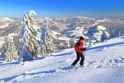 Woman climbs on touring skis among snow covered trees