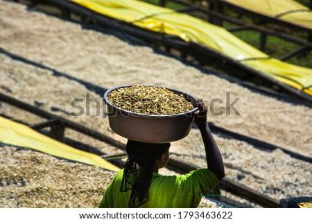 Woman coffee worker  carrying dried green coffee beans in the Kokabanya Washing Station in the Lake Kiva region of Rwanda May 2015