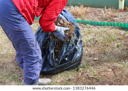Woman collects trash in the bag. Cleaning the area from dry leaves and grass. Background. Stock photo ©
