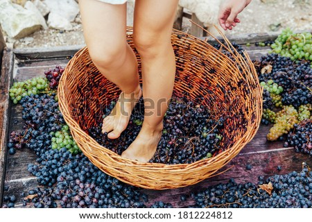 Photo of  Woman crushes feet of grapes to make wine