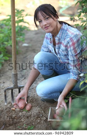 Woman digging potatoes in the garden